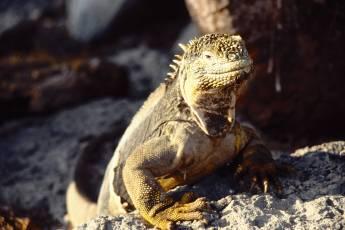 mp-reptile-001-03