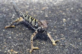 mp-reptile-001-18