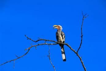 mp-bird-ibis-001-20