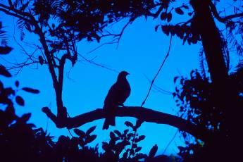 mp-bird-sparrow-001-13