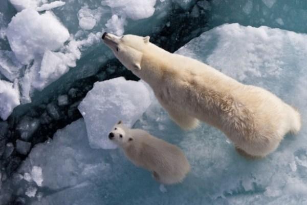 L'Antartide e i suoi abitanti