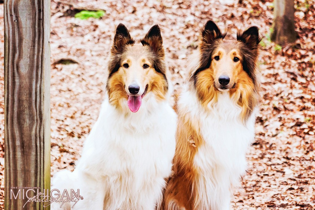 Anoush & Duncan, our very own adventure Collie dogs!