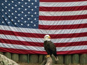american-eagle-with-flag-407636-m-300x225