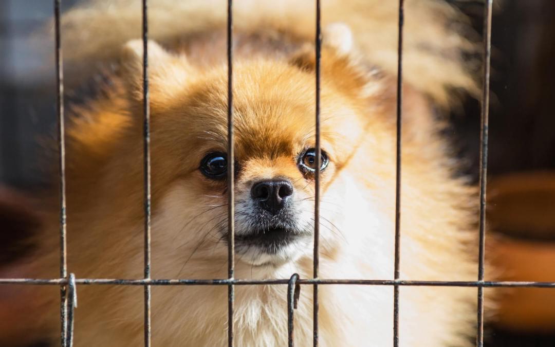 Dog behind bars.