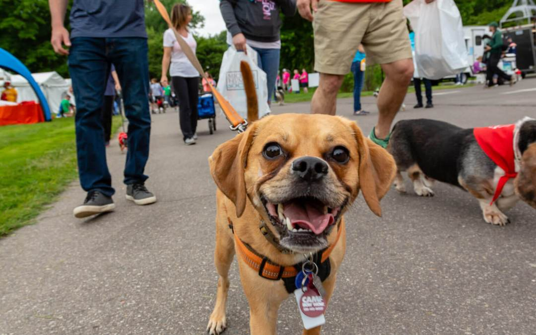 Mutt March Postponed Until July 28 Due to Parking Lot Flooding at Ford House