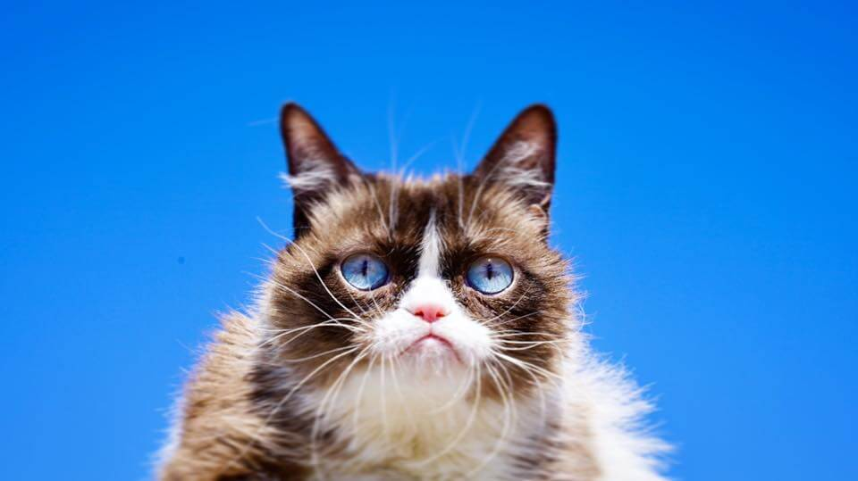 Grumpy Cat poses for a photo.