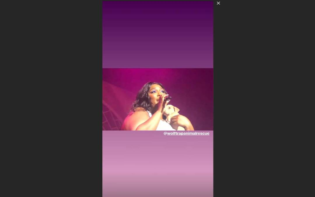 Lizzo holding a puppy at a concert.