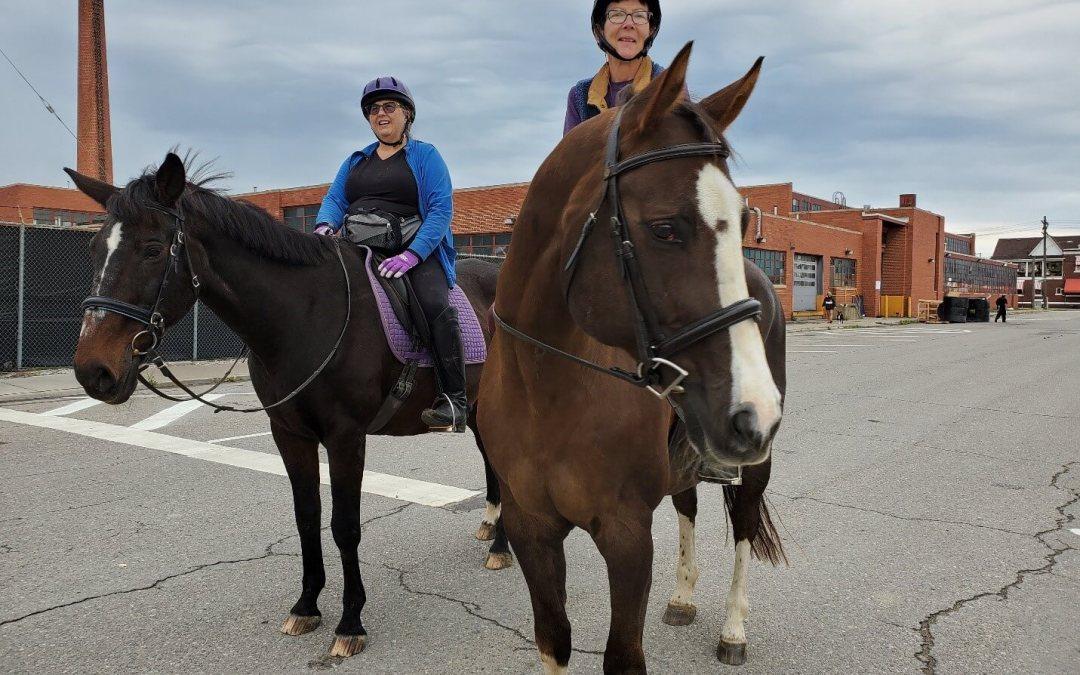 Horses at Giddy Up Pup.