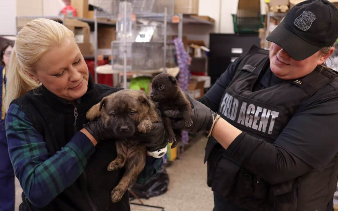 Puppies rescued by MHS