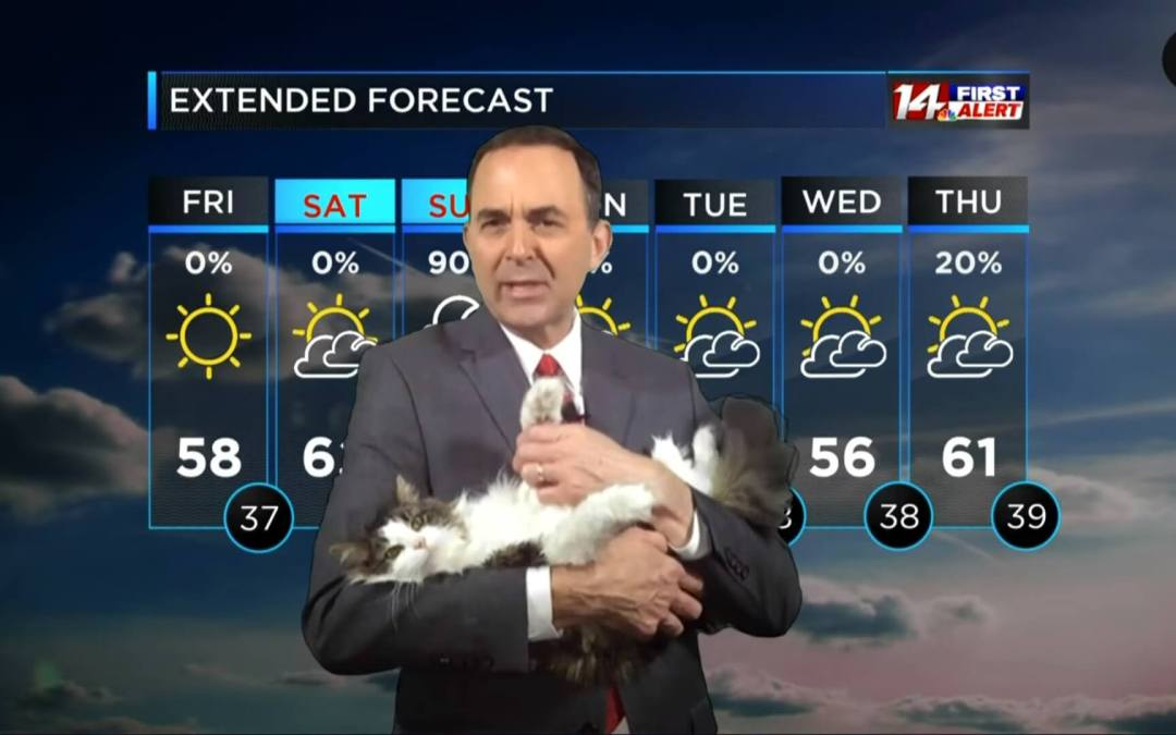 Weather Cat Becomes a Quarantine Star