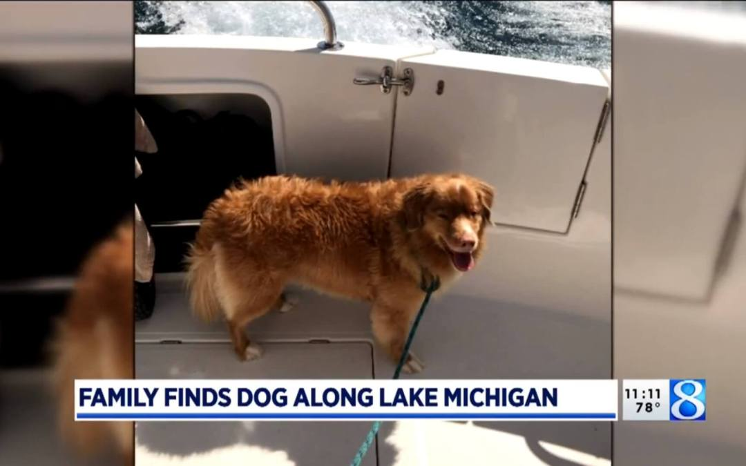 Family Rescues Lost Dog From Lake Michigan While Boating
