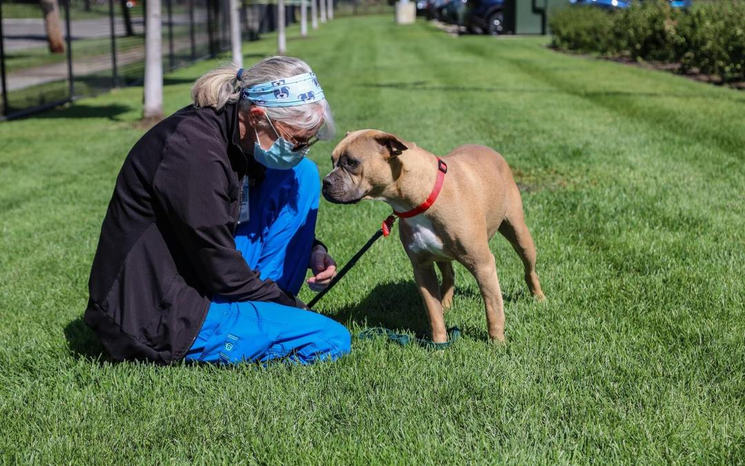 Meet a Very Good Dog Named Flicka