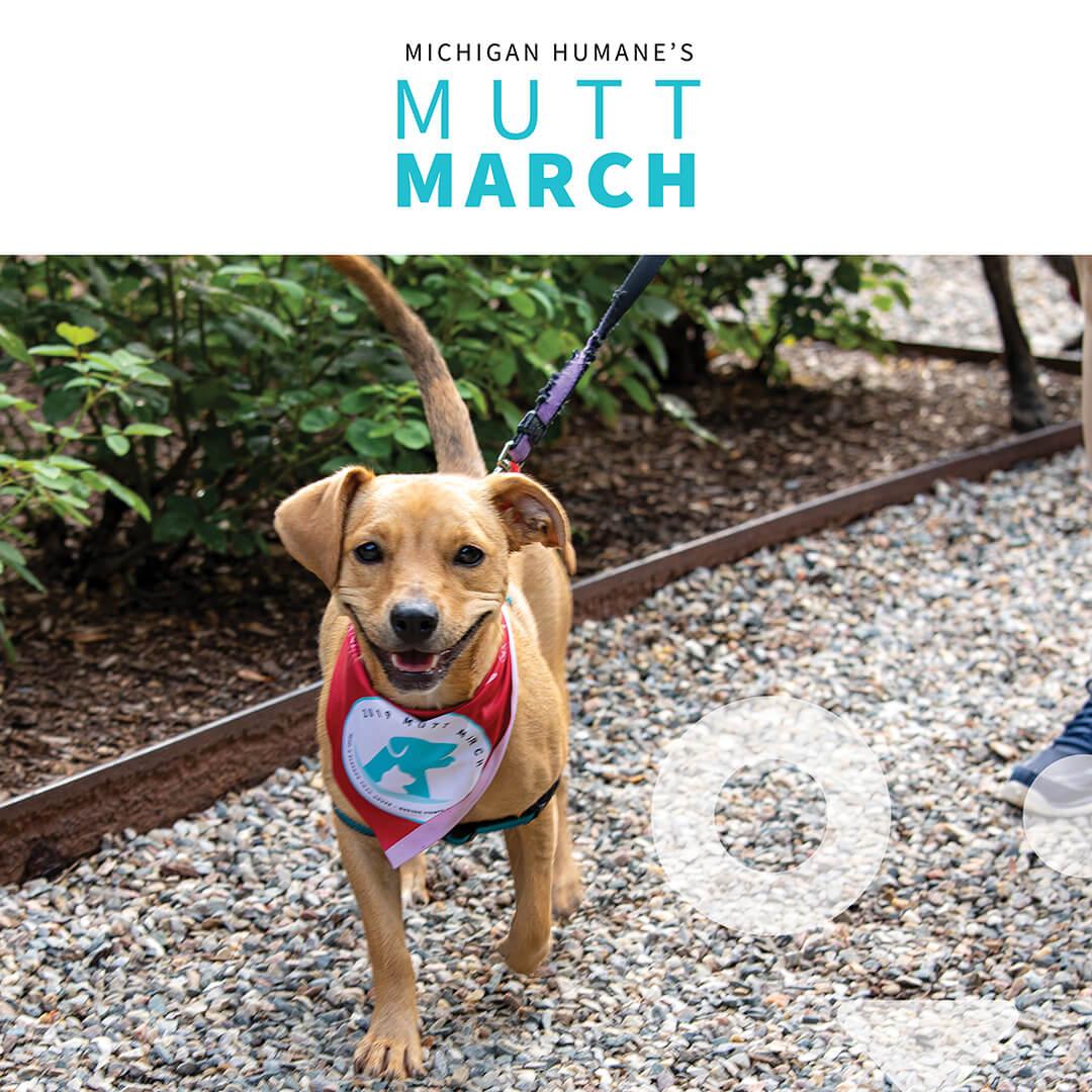 Mutt March 2021