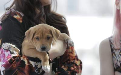 Join Michigan Humane For The 2021 Purrfect Bow Wow Brunch