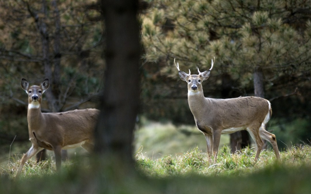 Deer Hunting: Frequently Asked Questions