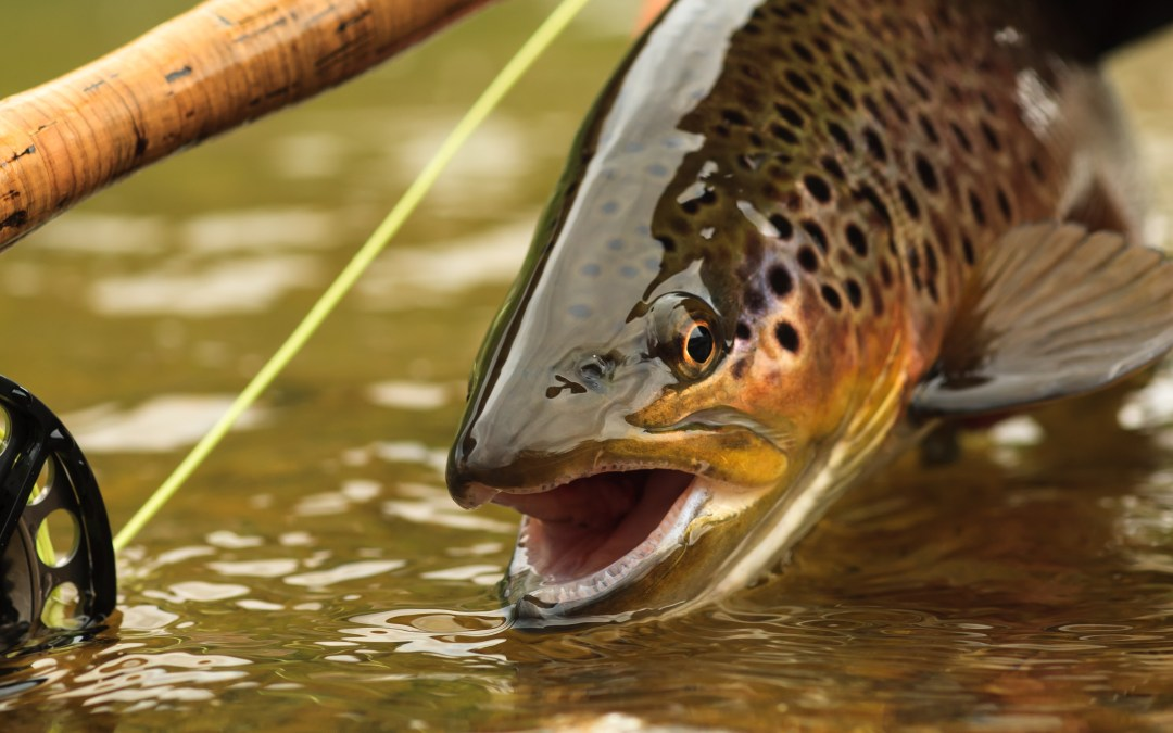 Why wait? Fishing for trout can be productive long before the last-Saturday-of-April opener