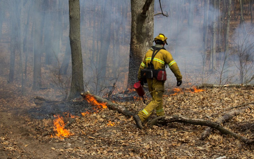 Mechanisms for Change: Fire as a Conservation Tool