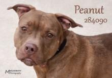 Peanut Photo: Mutzenmore Photography