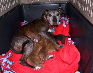 Shadow and her puppies