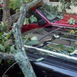 Tree on cars