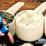 Diferentes tipos de proteínas para aumentar músculo