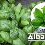 Propiedades Curativas Y Medicinales De La Albahaca