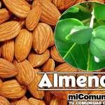 Propiedades Curativas Y Medicinales De La Almendra