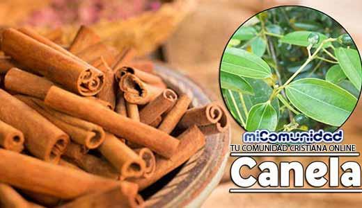 Propiedades Curativas Y Medicinales De La Canela