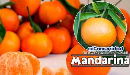 Propiedades Curativas Y Medicinales De La Mandarina