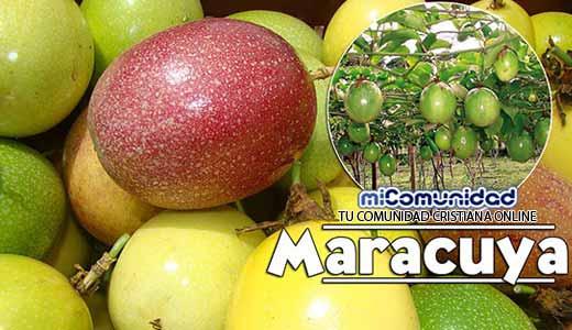 Propiedades Curativas Y Medicinales Del Maracuyá (Chinola)