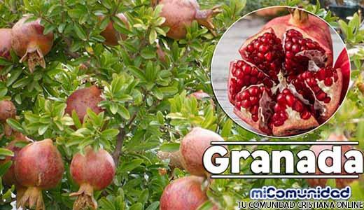 Propiedades Curativas y Medicinales De La Granada