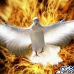 ¿Cómo es el Espíritu Santo como un fuego?