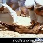 Judíos detenidos por tratar de sacrificar animales en Monte del Templo