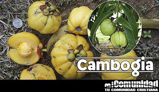Propiedades curativas y medicinales de la Garcinia Cambogia