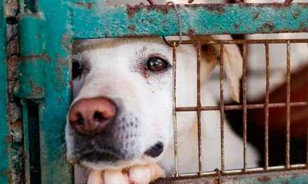 Habrá sanciones estrictas por «Maltrato animal».