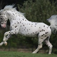 Top 10. Las mejores razas de caballos del mundo.