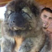 15 tiernos cachorros de perro que parecen osos