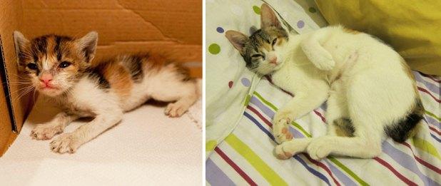 gatos-creciendo-antes-despues-15