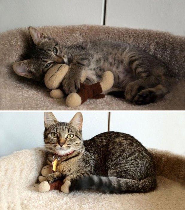 gatos-creciendo-antes-despues-20