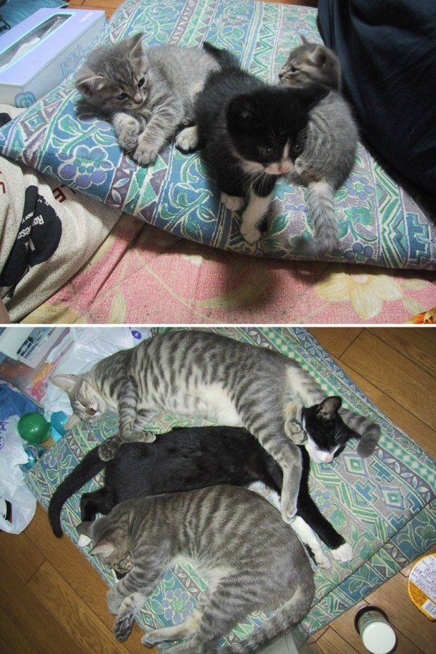 gatos-creciendo-antes-despues-8