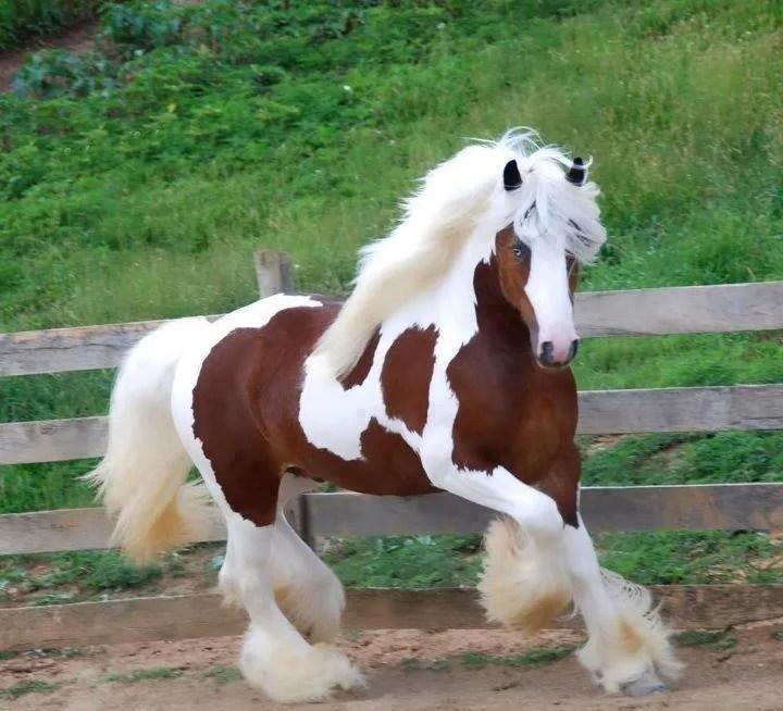 Las 10 razas más admiradas de caballos del mundo.