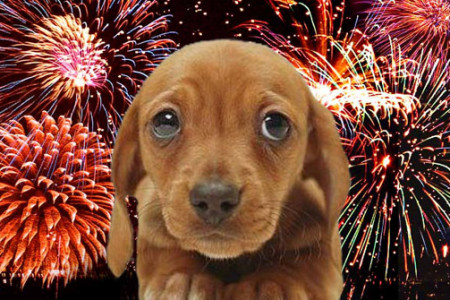 Fireworks-And-Dogs-450x300-1