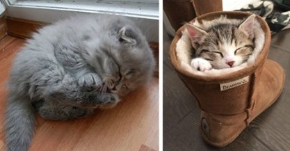 10 fotos de gatitos durmiendo que te dará un ataque de ternura.