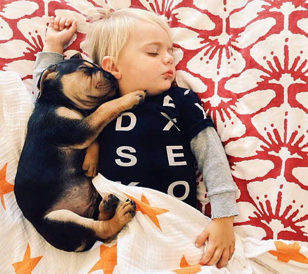 Theo-Beau-toddler-naps-with-puppy-theo-and-beau-14
