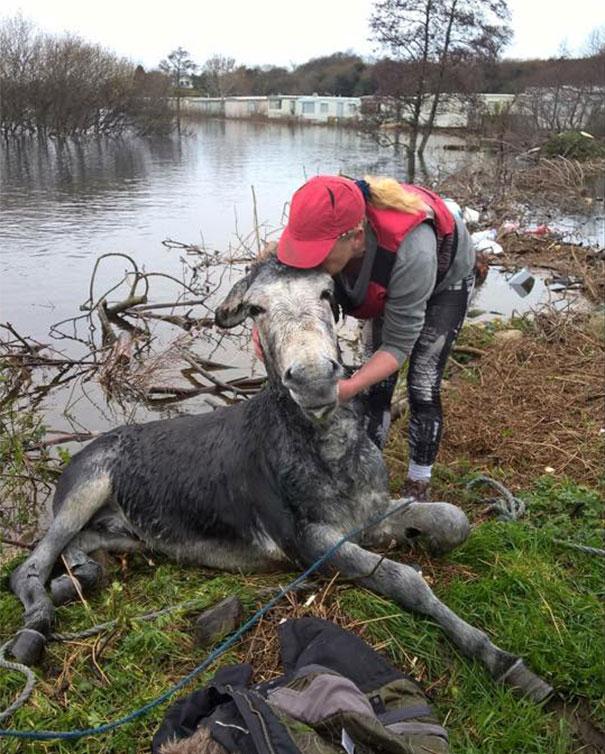 burro-rescatado-riada-sonrisa-irlanda-3