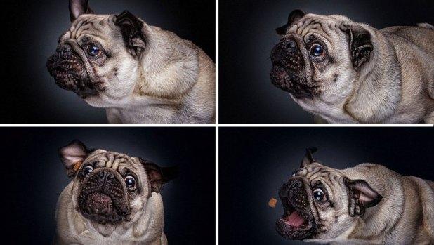 fotos-perros-expresiones-faciales-comida-christian-vieler-7