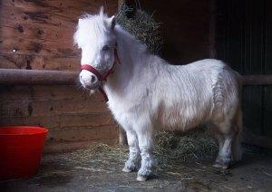 foursie-onesie-shetland-pony-daffy-11
