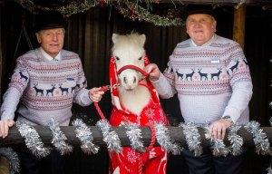 foursie-onesie-shetland-pony-daffy-21