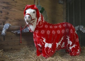 foursie-onesie-shetland-pony-daffy-31