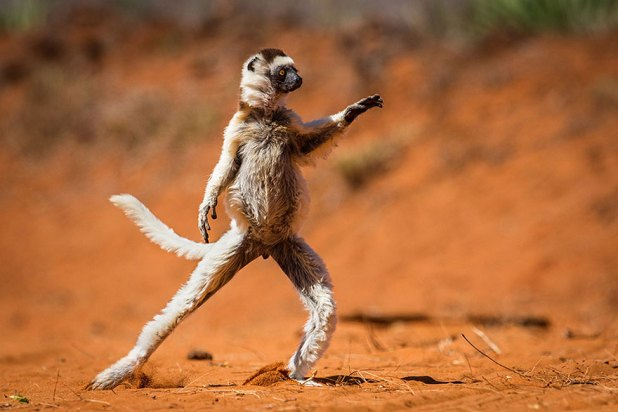 ganadores-premios-fotogradia-comedy-wildlife-2015-3